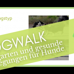 Tierschule.at - Dogwalk - Webinar